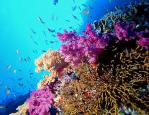 Inverno Esotico: Un Vacanza nel Mar Rosso