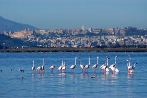 Cagliari e le Località Limitrofe – Luoghi Perfetti per l'Estate