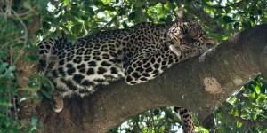 Pacchetti Vacanza Safari + Mare