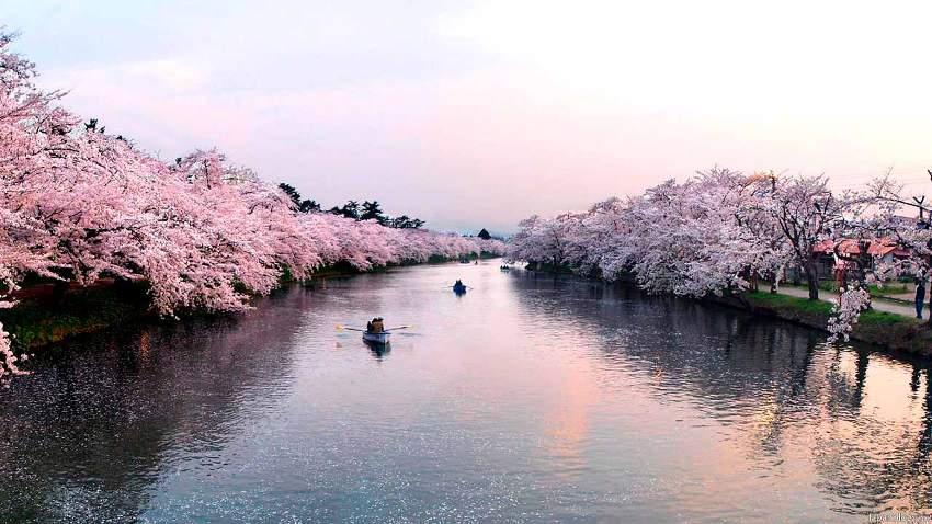 Hirosaki-città-fiori-ciliegio-1