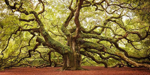 alberi-piu-incredibili-mondo