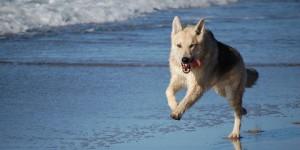 Le Spiagge Italiane Dove i Cani Sono Ammessi