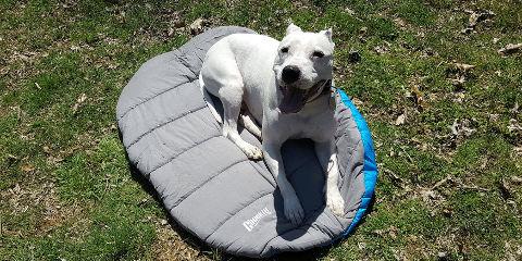 campeggi-italia-cani-ammessi