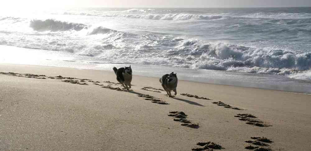 cani-sulla-spiaggia-1