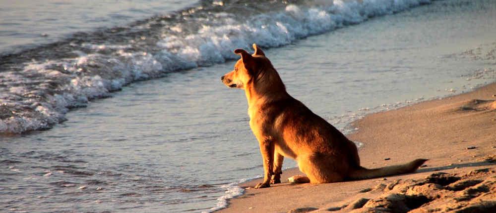 cani-sulla-spiaggia-2