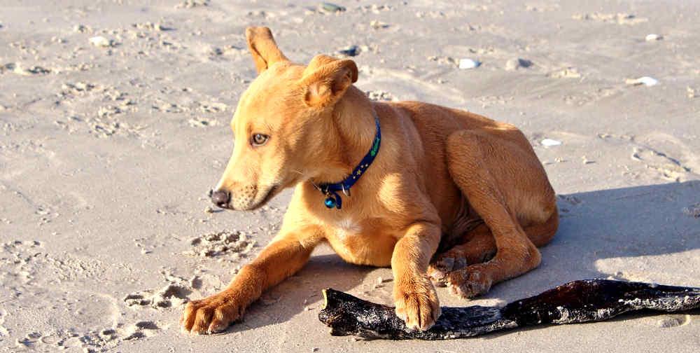 cani-sulla-spiaggia-3