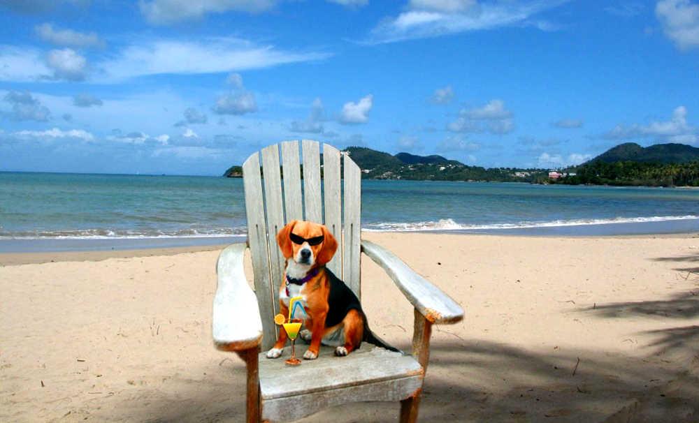 Campeggi Dove Sono Ammessi i Cani a Jesolo