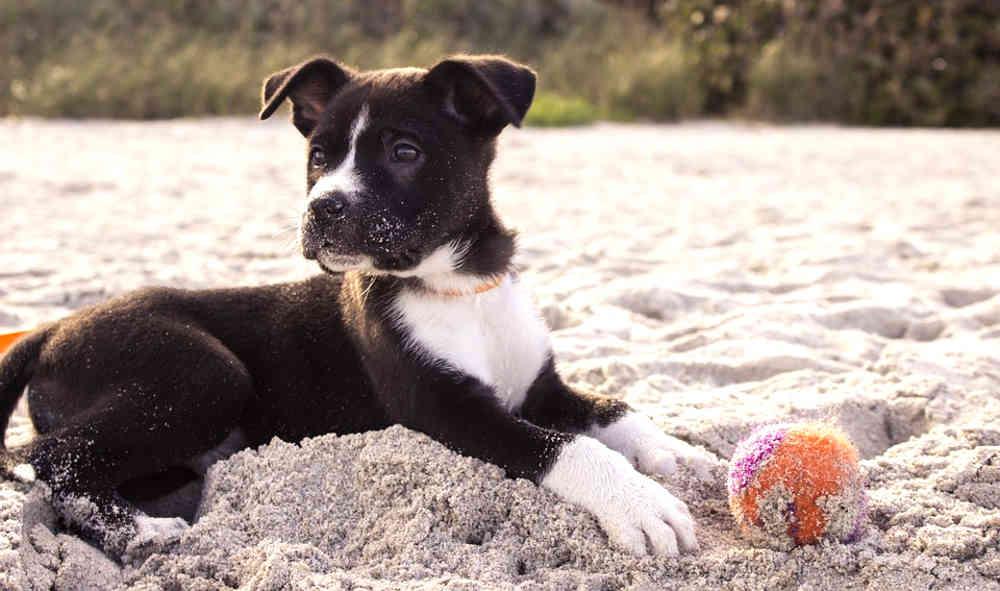 cani-sulla-spiaggia-5