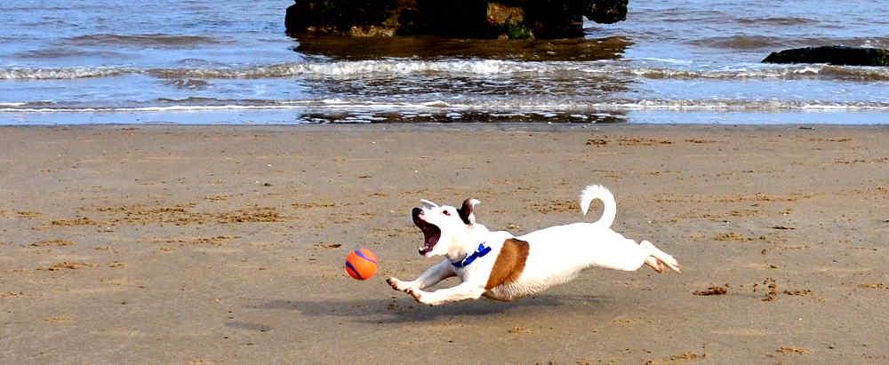 cani-sulla-spiaggia-6