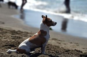 Campeggi Dove i Cani Sono Ammessi in Toscana
