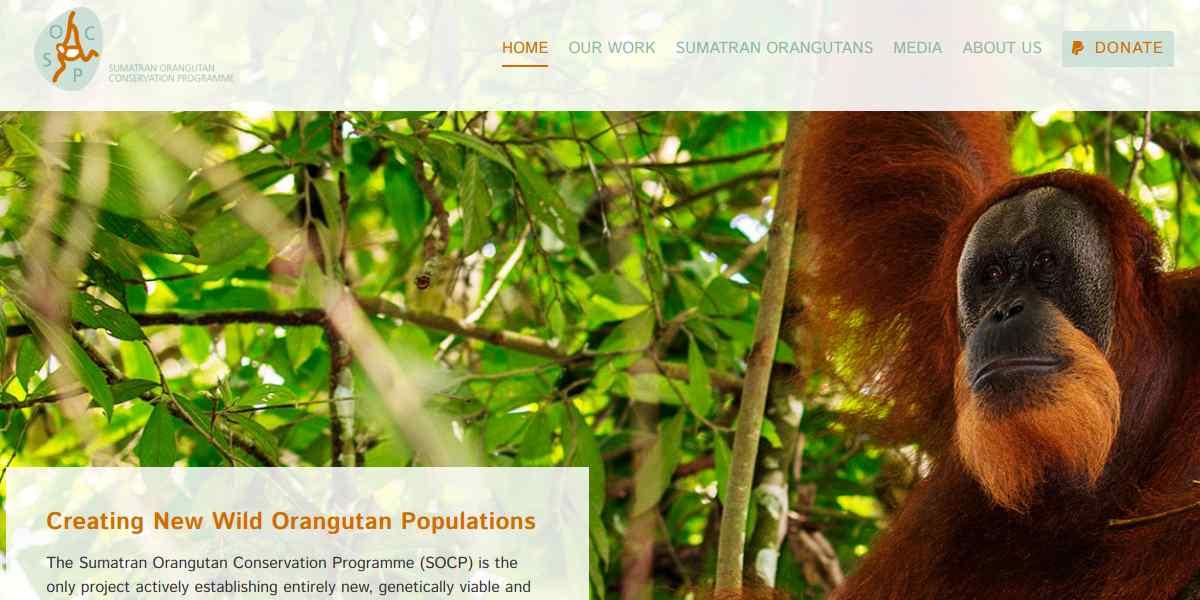 Sumatra e l'Orang Utang Rehabilitation Centre