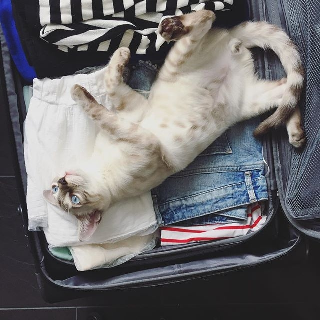Consigli utili per una vacanza con il gatto