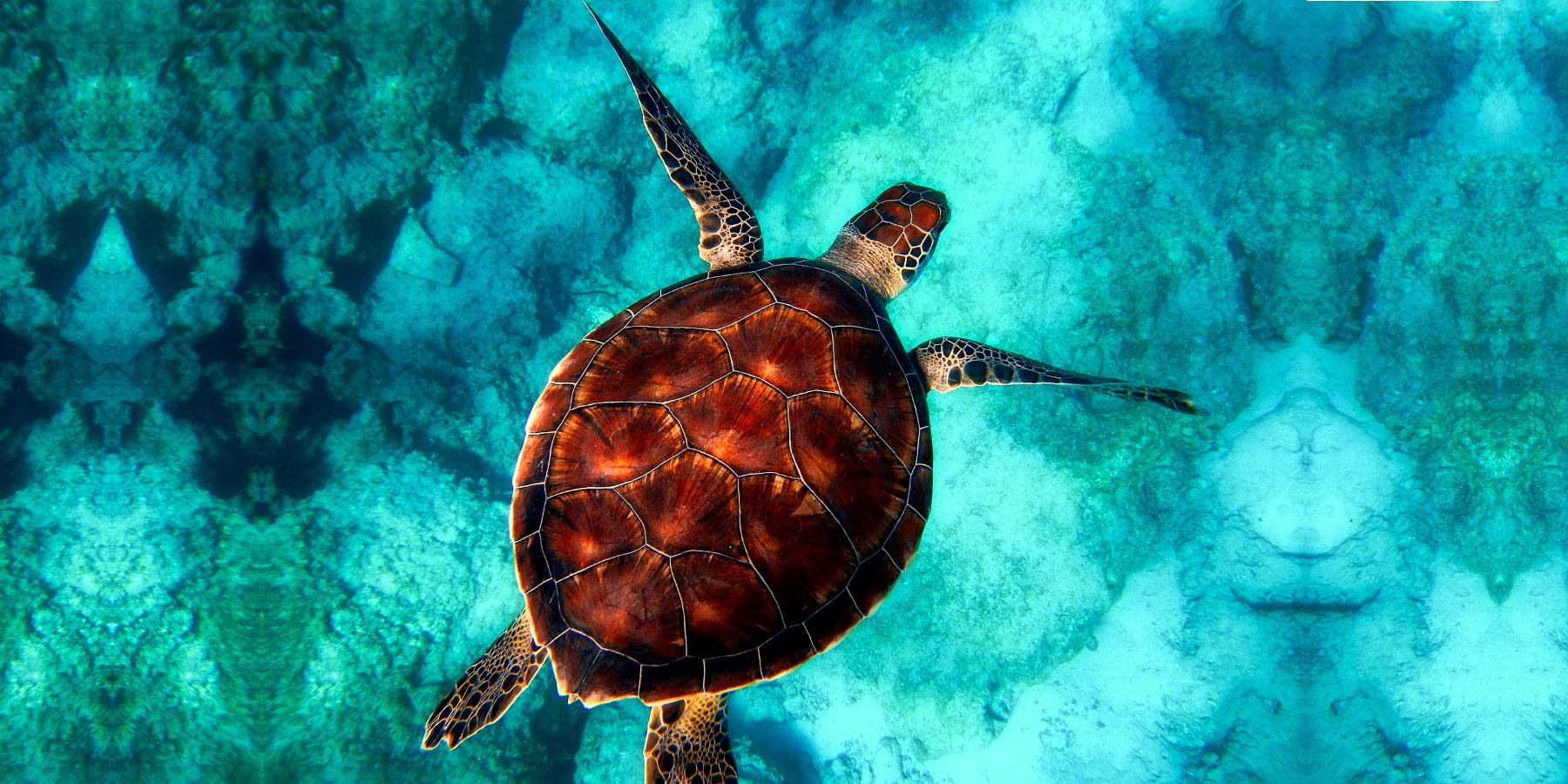 Diving e immersioni in sicurezza: i suggerimenti da tenere sempre a mente